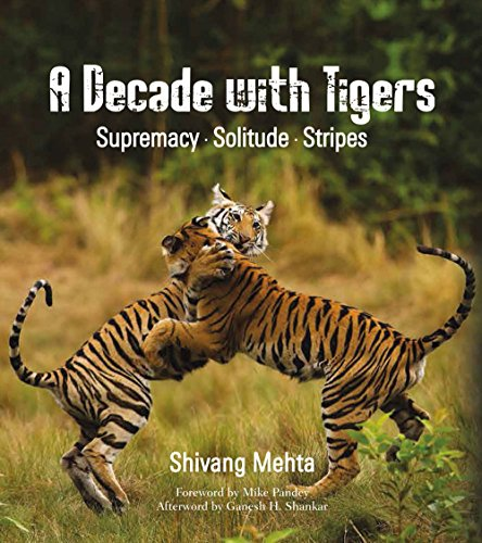A Decade with Tigers: Supremacy . Solitude . Stripes